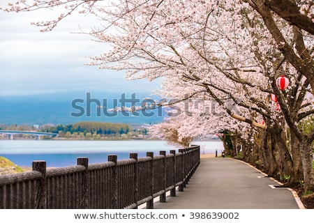 Japão · sakura · festival · lanterna · decoração · jardim - foto stock © juleha