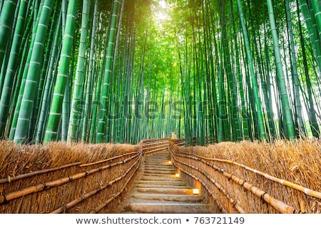 Bamboo Forest Japan Stock photo © juleha