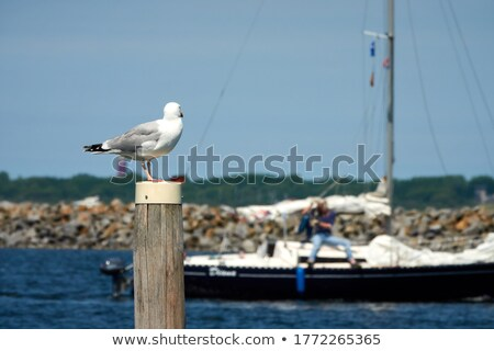 lighthouse and boat mast Stock photo © smithore