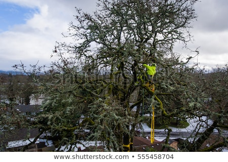 Cleaning Up Storm Damage with a Chainsaw Stock photo © ArenaCreative