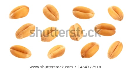 Whole wheat grains close up background Stock photo © shutswis