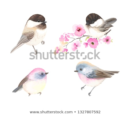 colorful bird and flower emblem graphic  Stock photo © creative_stock