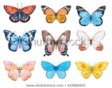 蝶 · シルエット · セット · アイコン · コレクション · 抽象的な - ストックフォト © creative_stock