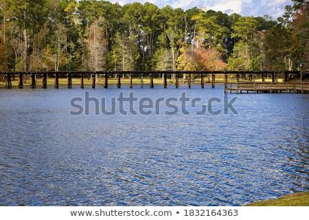 nature · réserve · Floride · USA · forêt · arbres - photo stock © Rob300