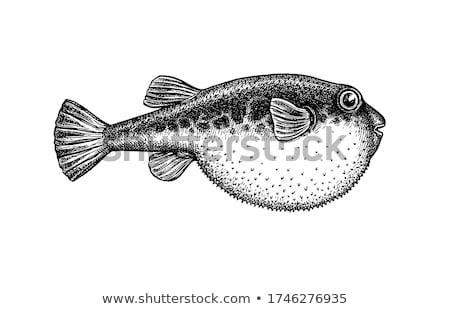 swellfish Stock photo © elwynn