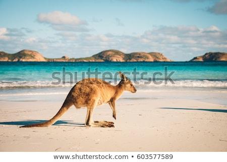 australia landscape stock photo © magann