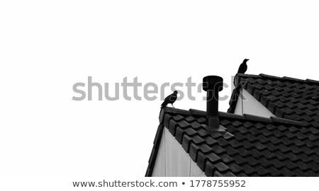 diagonal · branco · textura · madeira · construção - foto stock © deymos