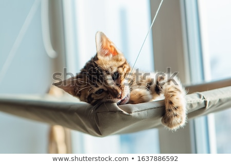 Bengal cat resting on bed Stock photo © backyardproductions