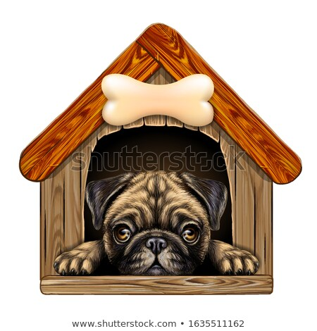 in the doghouse stock photo © snapshot