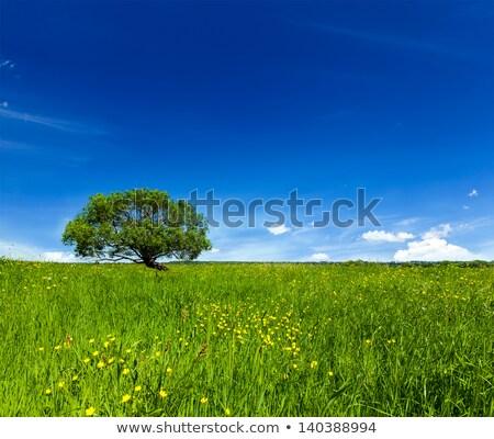 spring summer green field scenery lanscape with single tree stock photo © dmitry_rukhlenko