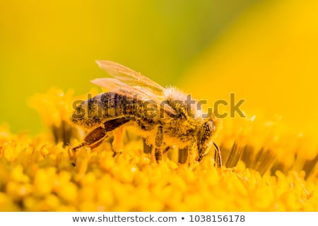 Stock photo: Bee and pollen
