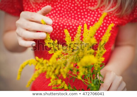 Red and yellow flower of a Mimosa tree Stock photo © AlessandroZocc
