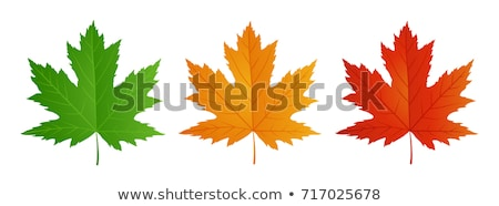 Orange maple leaf Stock photo © cmeder