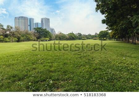 herbeux · parc · faible · point · vue · herbe - photo stock © 805promo