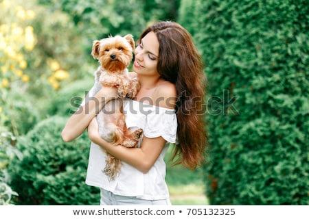少女 かわいい ヨークシャー テリア 犬 美しい ストックフォト © bartekwardziak