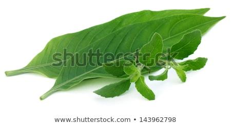 Medicinal herbs – Tulsi and Basak leaves  Stock photo © bdspn