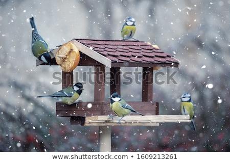 Tit patrząc żywności nasion ptaków Zdjęcia stock © taviphoto