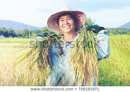 arrozal · grama · verde · blue · sky · nuvem · nublado · paisagem - foto stock © scenery1