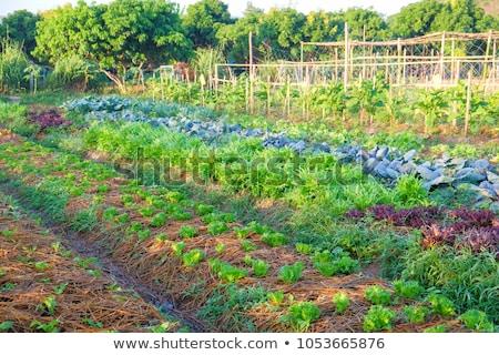 Stock fotó: Organikus · gazdálkodás · föld · farm · baromfi · ipar