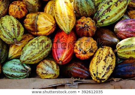 Kakao bitki meyve gıda orman meyve Stok fotoğraf © xura
