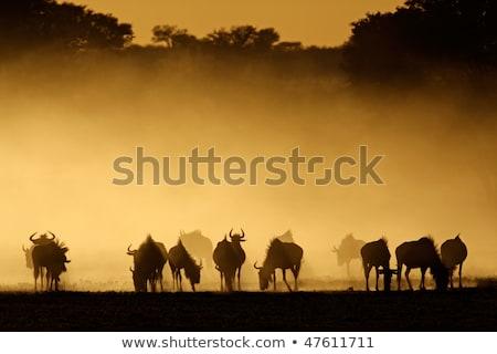 Afrikai vadon óriási drámai száraz tájkép Stock fotó © kasto