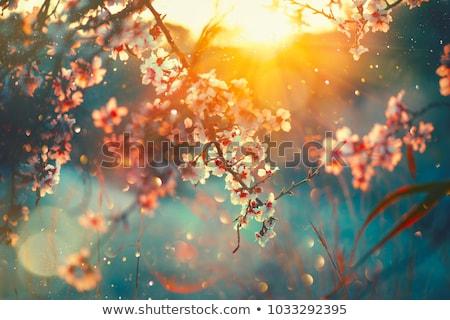 tavasz · ág · rózsaszín · virágok · virágzó · zöld · levelek - stock fotó © es75