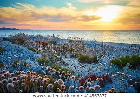manzara · yeşil · alan · sarı · çiçekler · mavi · gökyüzü · büyük - stok fotoğraf © antonio-s