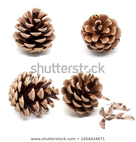 Gyönyörű fenyőfa kúp izolált fehér textúra Stock fotó © tetkoren