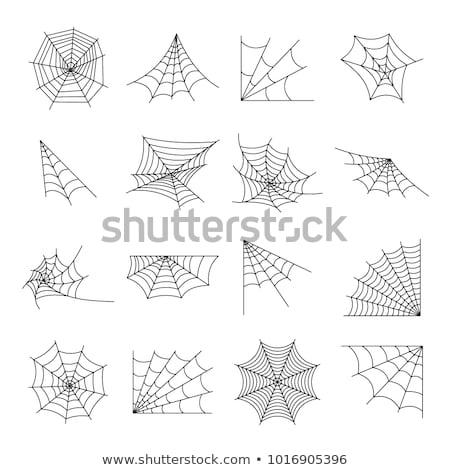 Tuzak örümcek ağı karanlık dizayn web doğa Stok fotoğraf © smeagorl