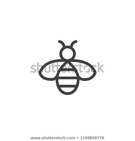 abelha · linha · ícone · teia · móvel - foto stock © rastudio