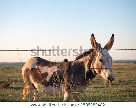 Stock photo: Donkey behind a green fence