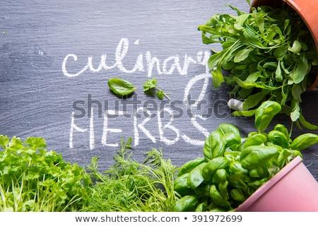 Frescos culinario hierbas cuchara de madera verde planta Foto stock © Digifoodstock