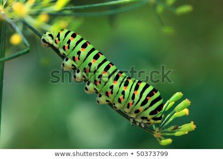 Oruga naranja verde color ilustración naturaleza Foto stock © bluering