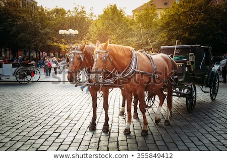 carriage with horse at sunset Stock photo © adrenalina