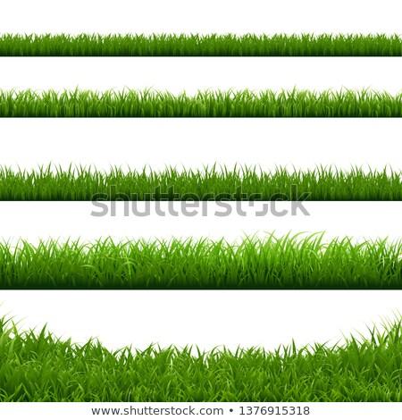 herbe · gradient · papier · printemps - photo stock © adamson