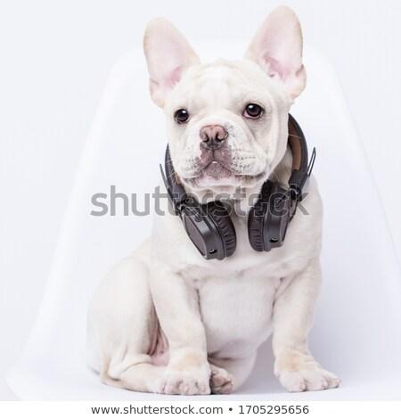 French bulldog in headphones  Stock photo © OleksandrO