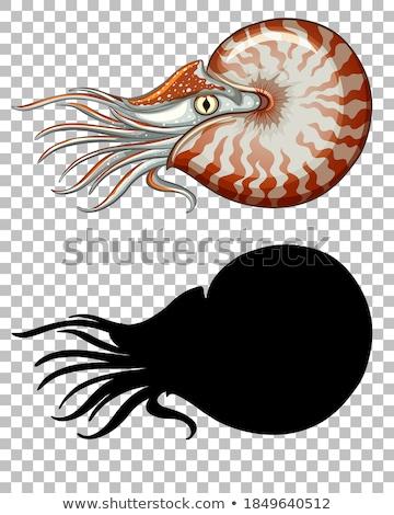 Sea nautilus on transparent background Stock photo © bluering