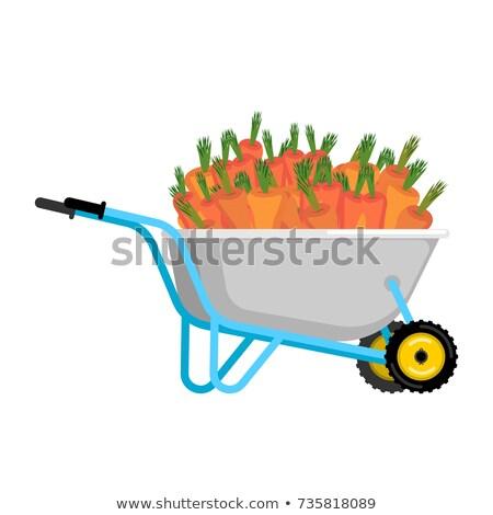 Wheelbarrow and carrot. vegetables in garden trolley. big harves Stock photo © popaukropa