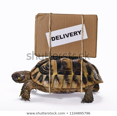 caracol · e-mail · isolado · ilustração · topo · envelope - foto stock © lightsource