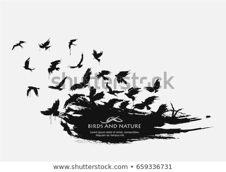 siyah · karga · 3d · render · yalıtılmış · beyaz · arka · plan - stok fotoğraf © aliencat