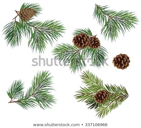 frame · testo · ramoscello · albero · legno - foto d'archivio © robuart