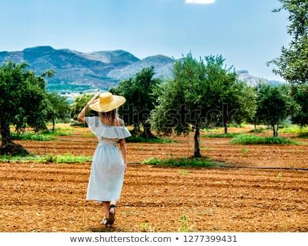 оливкового саду Греция Средиземное море природы Сток-фото © Anneleven