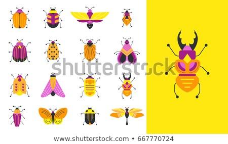 набор насекомое наклейку иллюстрация дизайна фон Сток-фото © bluering