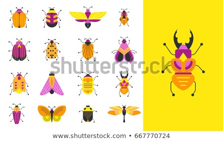 Conjunto inseto adesivo ilustração projeto fundo Foto stock © bluering