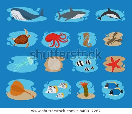красный · креветок · белый · рыбы · морем · дизайна - Сток-фото © netkov1