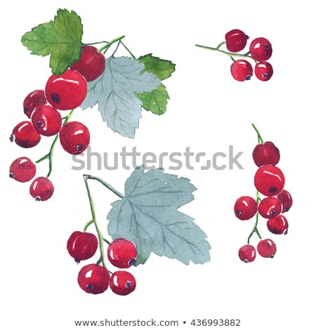 Red currant on white background. Watercolor illustration Stock photo © ConceptCafe