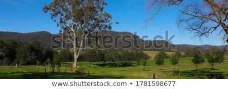 красивой водопада синий гор Австралия вертикальный Сток-фото © lovleah
