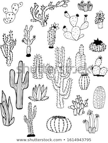 Stock fotó: Aranyos · kézzel · rajzolt · kaktusz · kártyák · szett · nedvdús