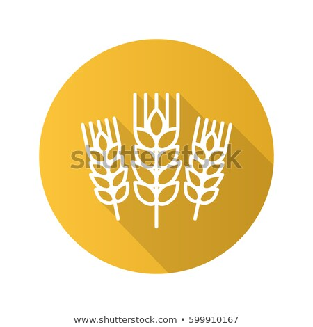 Color Designed Agriculture Grain Rye Ear Spike Vector Stock photo © pikepicture