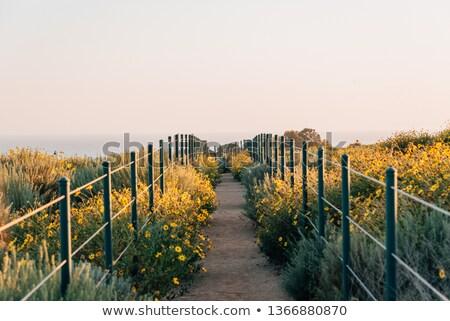 идиллический · декораций · Калифорния · различный · растений - Сток-фото © prill